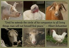 Until he extends the circle of his compassion to all living things, man will not himself find peace