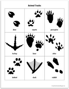 Relentlessly Fun, Deceptively Educational: Animal Tracks Match-Up Forest Animals, Woodland Animals, Animal Footprints, Wild Kratts, Printable Animals, Nocturnal Animals, Wild Animals, Baby Animals, Animal Tracks