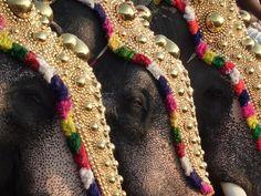 ELEFANTES DECORADOS - jithindaniel:    Elephant Festival in Kerala