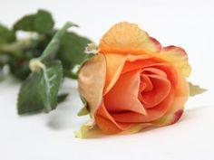 Růže oranžová