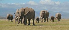 Kenia y Zanzíbar Safari Kongoni