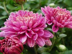 pink flowers garden -  pink flowers garden free stock photo Dimensions:2365 x 1774 Size:0.83 MB  - http://www.welovesolo.com/pink-flowers-garden-2/