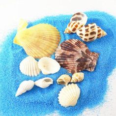 50pcs Assorted Colorful Sea Shells Beach Shells Ornament Crafts Nautical Decor