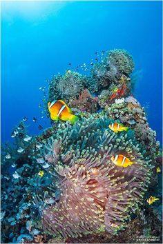 Underwater Wonderland : LifeUnderwater