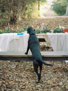 Photography: Lauren Kinsey   laurenkinsey.com   View more: http://stylemepretty.com/vault/gallery/56082