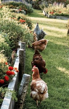 I remember when the farm still had chickens...someday again soon ♡