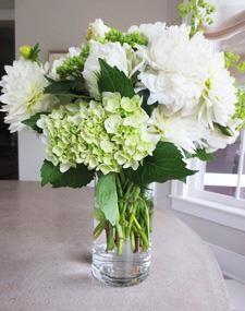 Spring flowers; white roses, dahlias and peonies with green and white hydrangeas, green hydrangeas buds and lime green alchemilla.