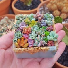 Want to learn more about growing succulents? Succulents Ireland has all you need to know. Want to learn more about growing succulents? Succulents Ireland has all you need to know. Growing Succulents, Succulents In Containers, Cacti And Succulents, Planting Succulents, Cactus Plants, Planting Flowers, Propagate Succulents, Air Plants, Succulent Gardening