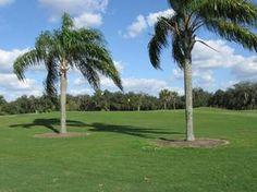 Golf Winter Haven, Florida - Willowbrook Municipal Golf Course - Exceptional Public Golf Course #whfl #CentralFL #Polk #golf