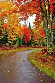 Driving through the damp Autumn roads.