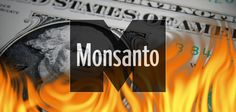 The biotech giant Monsanto announced that its earnings fell 34 percent in its first fiscal quarter as farmers reject GMO crops.