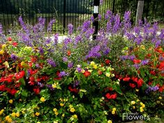 Simply Flowers, Inc. - Commercial Summer - Portfolio/17red, purple and yellow