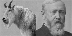 Old Whiskers President Benjamin Harrison