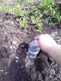 DIY bottle drip irrigation system keeps your garden growing with little water.