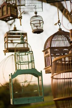 cool bird cages.
