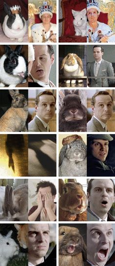 Finally one for Moriarty!!!!! Otter for Sherlock and hedgehog for John, now rabbit for Moriarty!