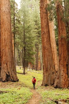 Go day hiking in hiking through grant grove in king's canyon national park california. This is one of the many hiking and photography locations near the campgrounds. You must-see the giant sequoia trees and be … Cold Springs Campground, Sunset Campground, Giant Sequoia National Monument, Giant Sequoia Trees, California National Parks, California California, California Camping, Tent Camping, Outdoor Camping