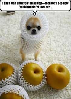 With the right outfit funny cute animals dogs adorable puppy animal pets funny quotes funny animals Funny Animal Pictures, Funny Animals, Cute Animals, Funny Images, Funniest Pictures, Animal Pics, Dog Pictures, Hilarious Pictures, Wild Animals