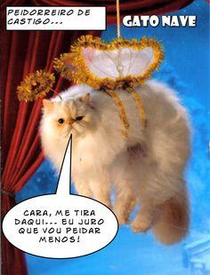 Gatos Engraçados -  Peidorreiro de Castigo