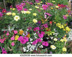 flor, en, centro de jardín Ver Imagen agrandada