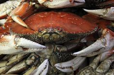 Fishing report -  Oregon Crabbers