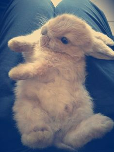 So. . .Very. . . Cute.  Bunnies need special care, but that cuteness makes it all worth while!