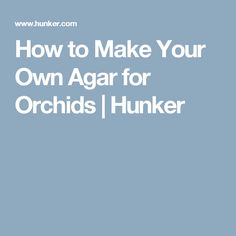 How to Make Your Own Agar for Orchids | Hunker