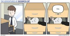 Business Cat - Drawer