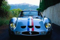 A stunning, classic member of the prancing horse family.