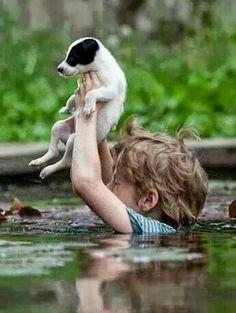 #Inundaciones en Serbia #flood #dog