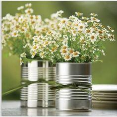 Plante boite de conserve