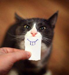Creatividad. Gato sonriente. Senclla y simpática imagen. ¡Es una pena que desconozcamos los nombres del gato y el ilustrador!