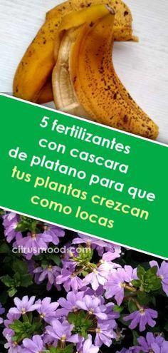 5 Fertilizantes Con Cascara De Platano Para Que Tus Plantas Crezcan Como Locas Fertilizante Abono Caseros Plantas Crecer Jardine Banana Small Patio Fruit