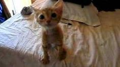 hungry kittens - YouTube