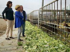 La Región de Murcia es la tercera comunidad en producción de leche de cabra