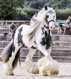 The Best horses on the world 🤞Irish-cob All The Pretty Horses, Beautiful Horses, Animals Beautiful, Cute Horses, Horse Love, Baby Horses, Horses And Dogs, Horse Pictures, Animal Pictures
