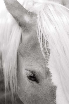 Horse - black and white by buckscountyframes, New Hope, PA