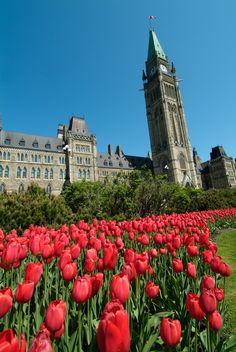 Canadian Tulip Festival - Ottawa, Ontario #DiscoverOntario