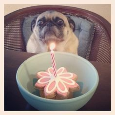 """""""Damnit, I gave up sugar two days ago."""" 