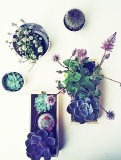 Succulents and Wildflowers
