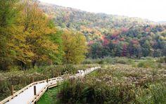 Appalachian-Trail-Adventures-Kent-Pond-and-Thundering-Brook-Falls.jpg
