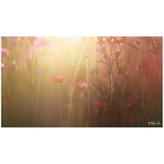 / Overflow  #花をながめて #松戸 #ポピー #シャーレーポピー #東京カメラ部 #花 #花の写真館 #松戸フラワーライン #はなまっぷ #IGersJP #team_jp_ #team_jp_flower #photooftheday #poppy #flowerstagram #500px #kf_gallery #loves_japan #flower #flowers #dreamyphoto #tokyocameraclub #floral_secrets #light_nikon #tv_flowers #flowermagic #flowerslovers #flowerpower #flowerstagram #d750 #9vaga_softflowers9 gelinshop.com/...