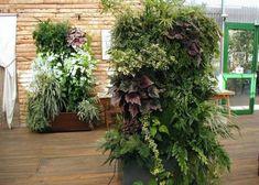 Vertical garden designs 555x396 Modern Vertical Garden Inspirations - Vertical gardening