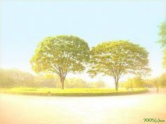 Seasonal 彩の戯(さいのぎ): 「秋の節の日」のチャージ 2005-09-23