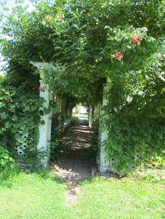 Livingston - Backus Garden