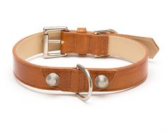 Balencioochee Straight Dog Collar with Silver Rivets -- Want to know more, click on the image. (This is an affiliate link and I receive a commission for the sales)