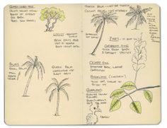 Belize Moleskine sketches