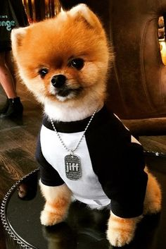 We are loving that our guest @kaithorton spotted the famous @jiffpom while working the Pre Oscars KFPR Style Lounge at @andazweho. #PetsofHyatt