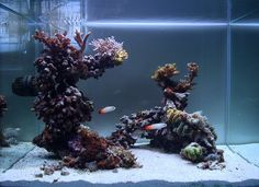 Like this open reef structure Saltwater Aquarium Setup, Coral Reef Aquarium, Saltwater Fish Tanks, Aquarium Design, Marine Aquarium, Aquarium Fish Tank, Marine Fish Tanks, Marine Tank, Nano Reef Tank