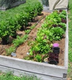 Designing A Compact Vegetable Garden on designing a japanese garden, designing a rose garden, designing a shrub garden, designing a butterfly garden, designing a fruit garden, designing a school garden, designing an herb garden, designing a water garden, designing a beautiful garden, designing a square foot garden, designing a desert garden, designing a flower garden, designing a home studio, designing a chicken coop, designing a woodland garden, designing your vegetable garden, designing a container garden, designing a herb garden, designing a perennial garden, designing a cactus garden,